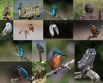 枝头上的小鸟摄影高清图片