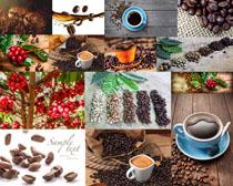 咖啡与果实组合拍摄高清图片