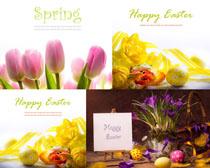 花朵与彩蛋摄影高清图片