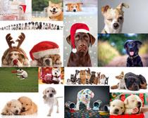 欢乐狗狗拍摄高清图片
