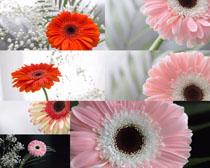 美丽盛开花朵摄影高清图片