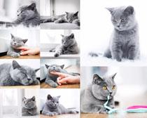 可爱灰色猫咪摄影高清图片