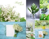 花朵白纸装饰摄影高清图片