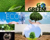 环保与植物摄影高清图片
