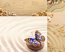 细沙与贝壳摄影高清图片