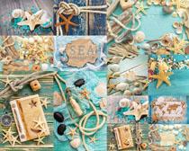 海星贝壳装饰摄影高清图片