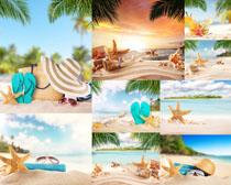 沙滩海边物品摄影高清图片