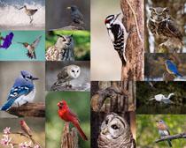 鸟类摄影动物高清图片