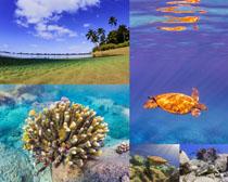 海底世界风景摄影高清图片