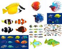 大海鱼种摄影时时彩娱乐网站