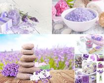 SPA毛巾花朵摄影高清图片