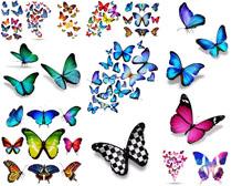 颜色蝴蝶摄影时时彩娱乐网站