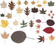 漂亮的秋叶摄影高清图片