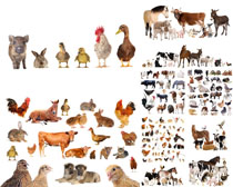 各种动物拍摄高清图片
