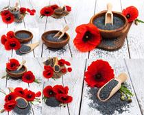 红花与芝麻摄影高清图片