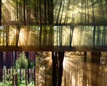 树木阳光风景摄影高清图片