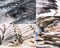 海鱼食物展示摄影高清图片