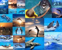 聪明的海豚摄影时时彩娱乐网站