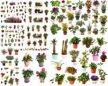 各种盆栽花朵拍摄高清图片