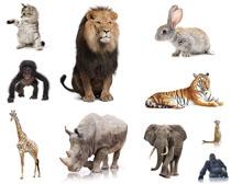 动物高清摄影图片