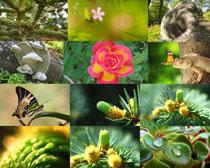蝴蝶与花朵拍摄高清图片