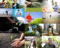 浇花朵的男人摄影高清图片