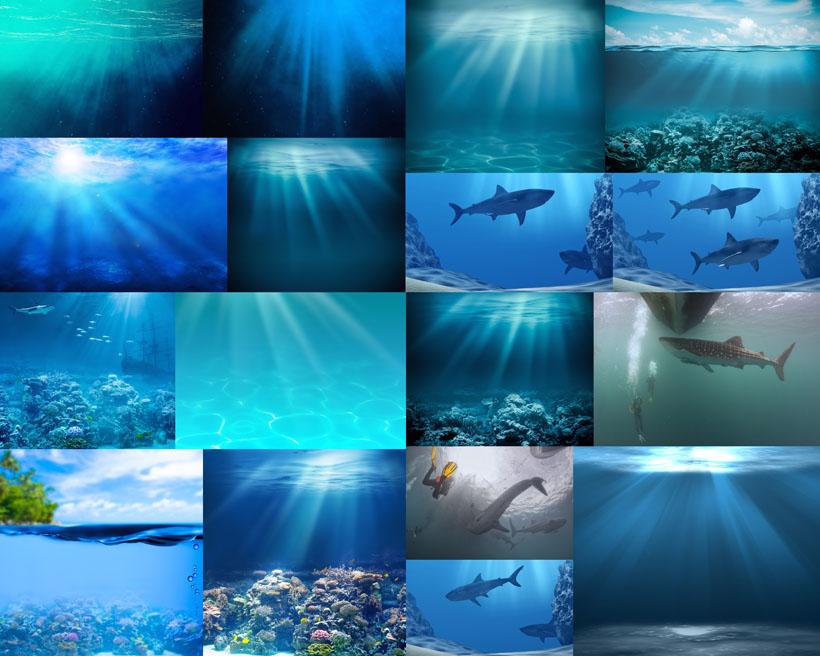 海底风景鱼摄影高清图片
