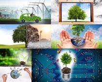 环保树木自然景观摄影高清图片