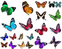 蝴蝶昆虫摄影时时彩娱乐网站