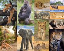 狮子大象猩猩摄影时时彩娱乐网站