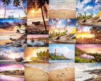 海鸟自然风光拍摄高清图片