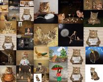 可爱搞怪猫咪摄影高清图片