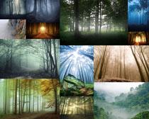 樹林植物攝影高清圖片