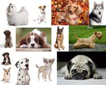 可爱的动物小狗摄影高清图片