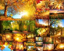 秋天樹木葉子攝影高清圖片