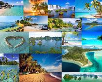美丽的海鸟风景摄影高清图片