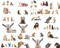 猫咪狗动物摄影高清图片
