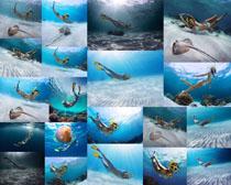 潜水的比基尼美女摄影高清图片