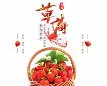 草莓宣传海报设计PSD素材