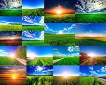 红色稻田风景摄影高清图片