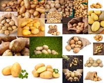 食物马铃薯摄影高清图片