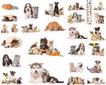 猫咪与狗狗摄影高清图片