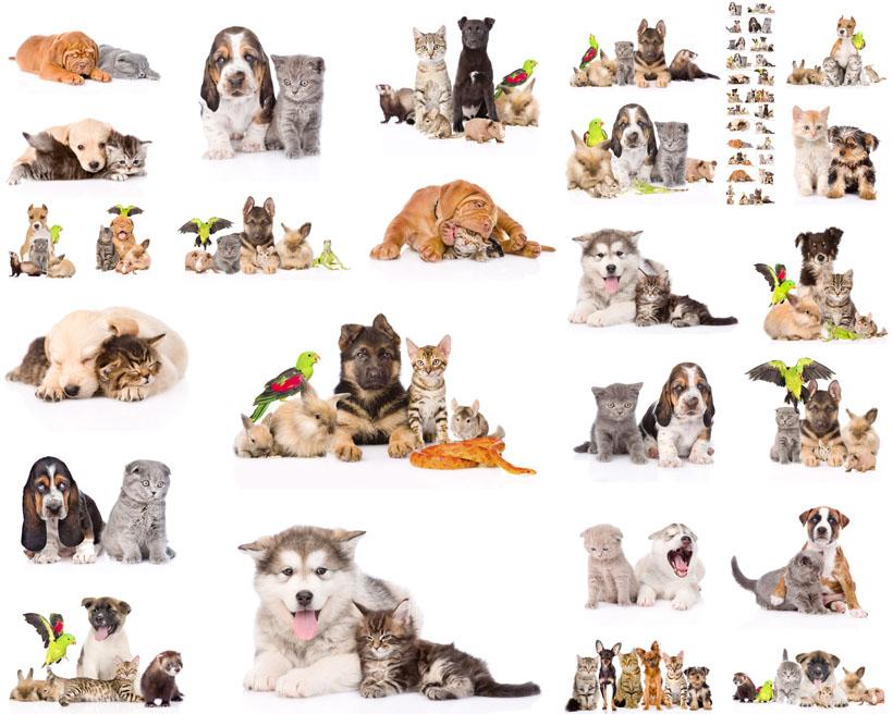 可爱狗狗猫咪动物写真拍摄摄影高清图片图库素材图片素材 注意: 猫咪