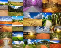 田园道路风光摄影高清图片