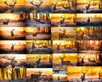 森林里的鹿摄影时时彩娱乐网站