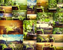 葡萄与红酒摄影高清图片