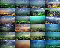 海底植物攝影高清圖片