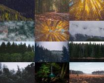 森林樹木景觀攝影高清圖片