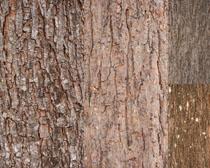 树皮纹路背景摄影高清图片