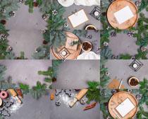 植物松子葉子攝影高清圖片